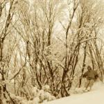 Snow Storm Journal – Australia Sept 26 and 27, 2009