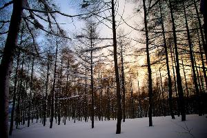 TRAVEL – Snowboard Japan – Myoko Kogen