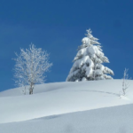 WORLD SNOW WRAP – Superb Snow For The Holiday Season
