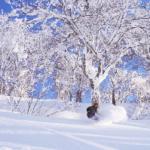Ultimate Guide to Spring Skiing in Nagano & Niigata