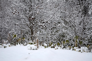 STORMWATCH – Blizzard Alert for Niseko