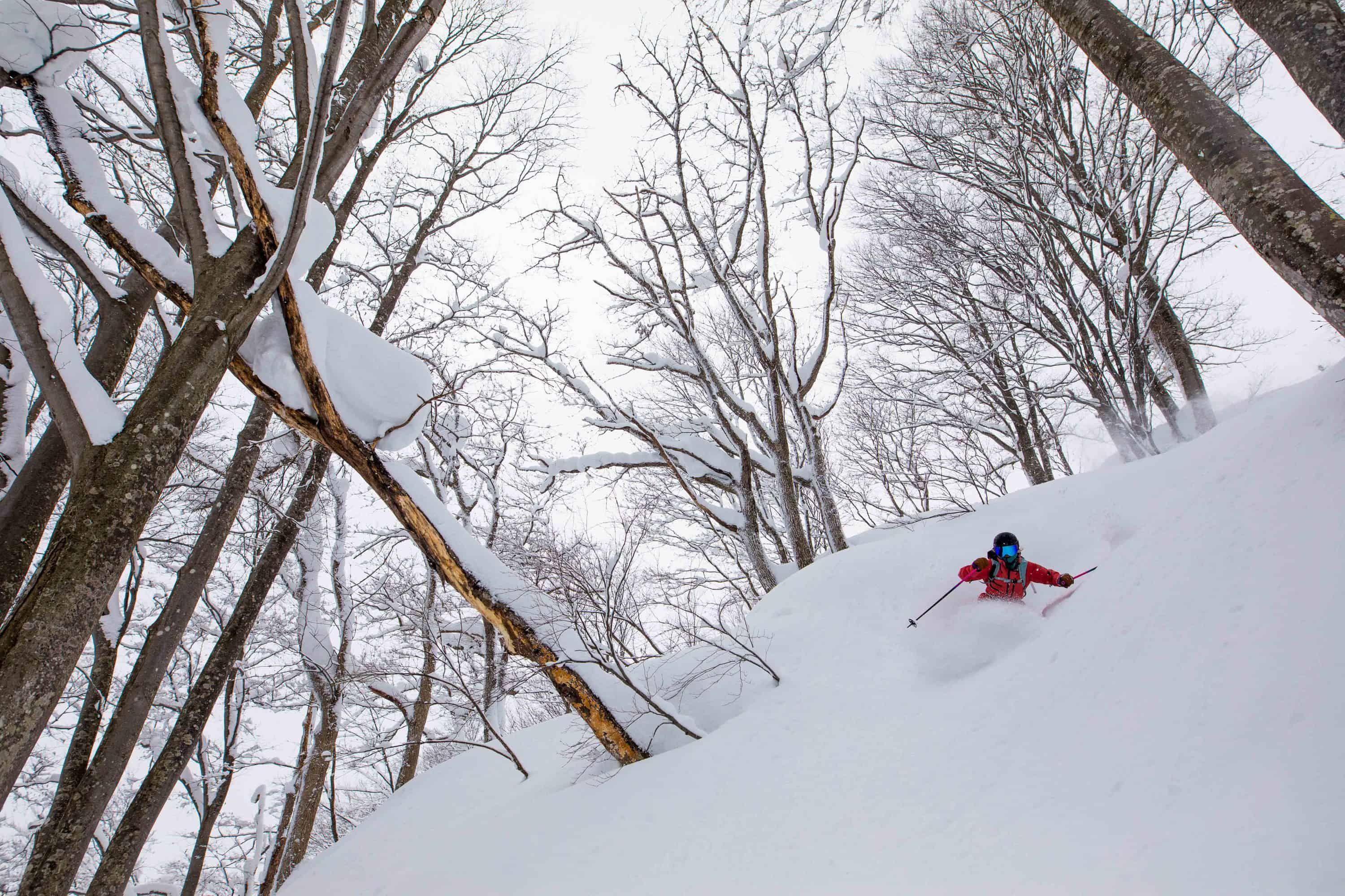 First Timer's Guide to Hakuba