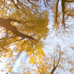 "VIDEO – ""Leaves"" By Marco Lutz"