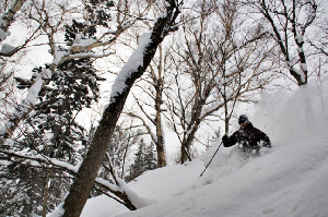 Travel Northern Hemisphere - The Pros' Favourite Snow Spots
