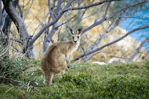 What To Watch Out For This Season – The Roads And The Roos