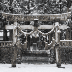 Fresh snow through out the village, The Torii gates looking very pretty!