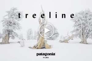Treeline - An Ethereal Film By Patagonia Celebrating Trees And Skiing Between Them - Video