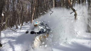 Powder turns in the trees somewhere near Tsudaike, Hakuba yesterday. Photo: Tim Wakening