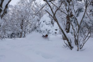 The tree-lines of Appi Kogen proved fruitful in the first week of February for fresh pow