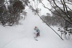 Ripping fresh snow between the snowgums
