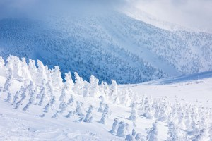 A veritable army of snow monsters Photo:: Matt Wiseman