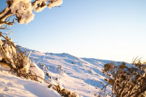 Sunrise in Thredbo. Photo: Thredbo