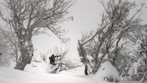 Lee Rolls at perisher on July 13. This weekend's storm will deliver similar snow, a bit dense and heavy. Photo: Perisher
