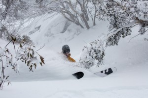 'F' Fun. One of there best things about skiignin Australia is freshies throw the gum trees. Tim Myers Thredbo. Photo: Colin Levitch