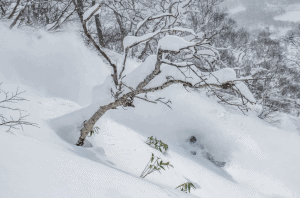 Niseko last week. January was a good month for powder in Japan and it looks like another round of pow is on the way next week. Photo: Sea and Summit Photography